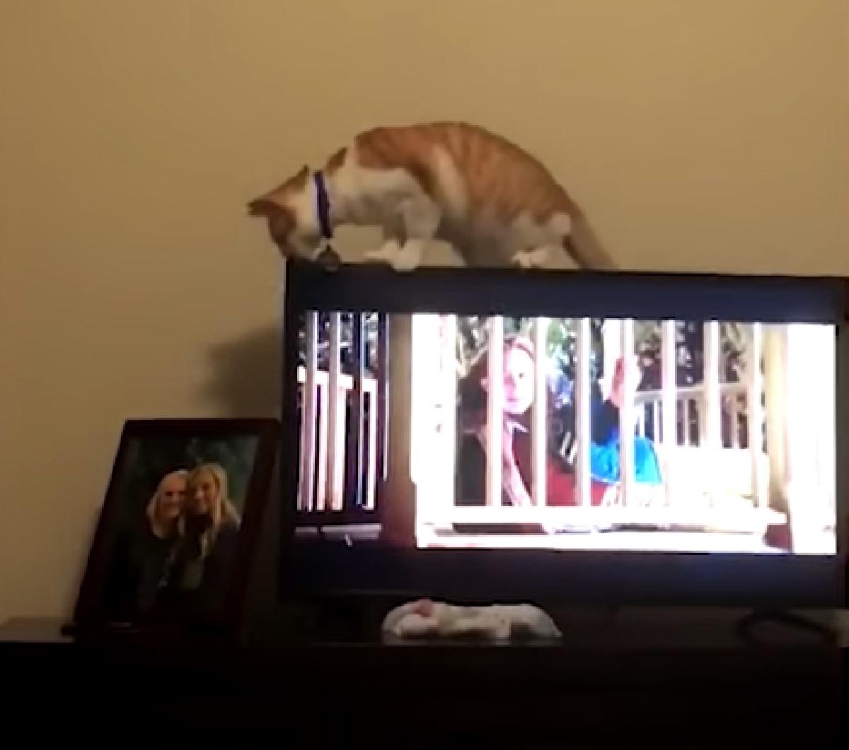 astro gattino tornado dentro casa