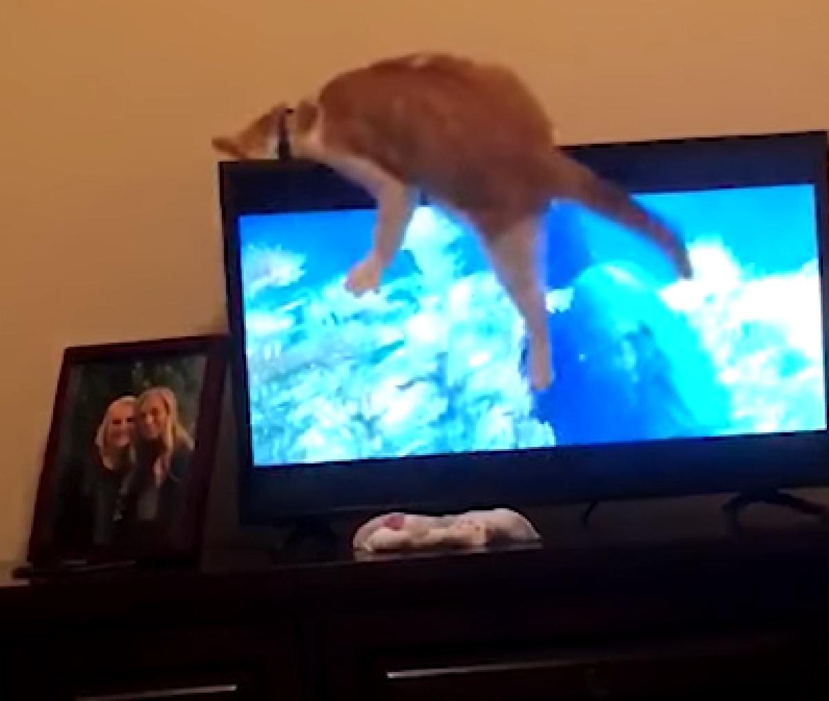 astro gattino europeo guai in vista
