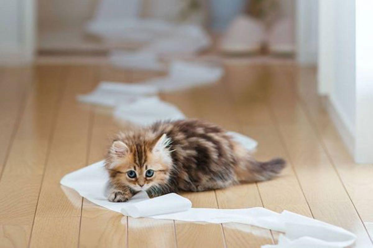 gattino fa la pipì ovunque