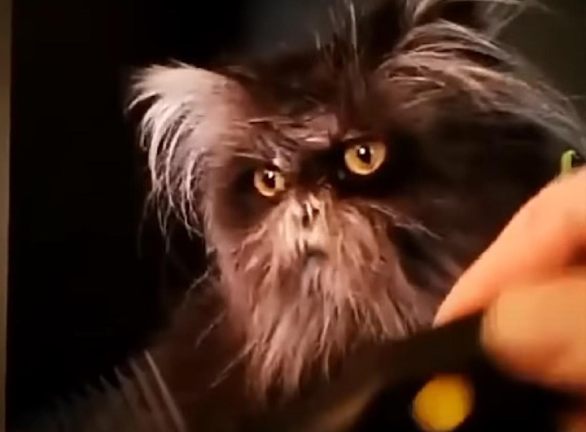 moony gattino condizione rara pelo