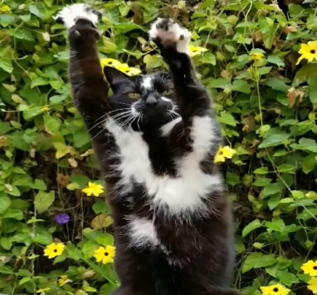 keys gattino papà dice stretching