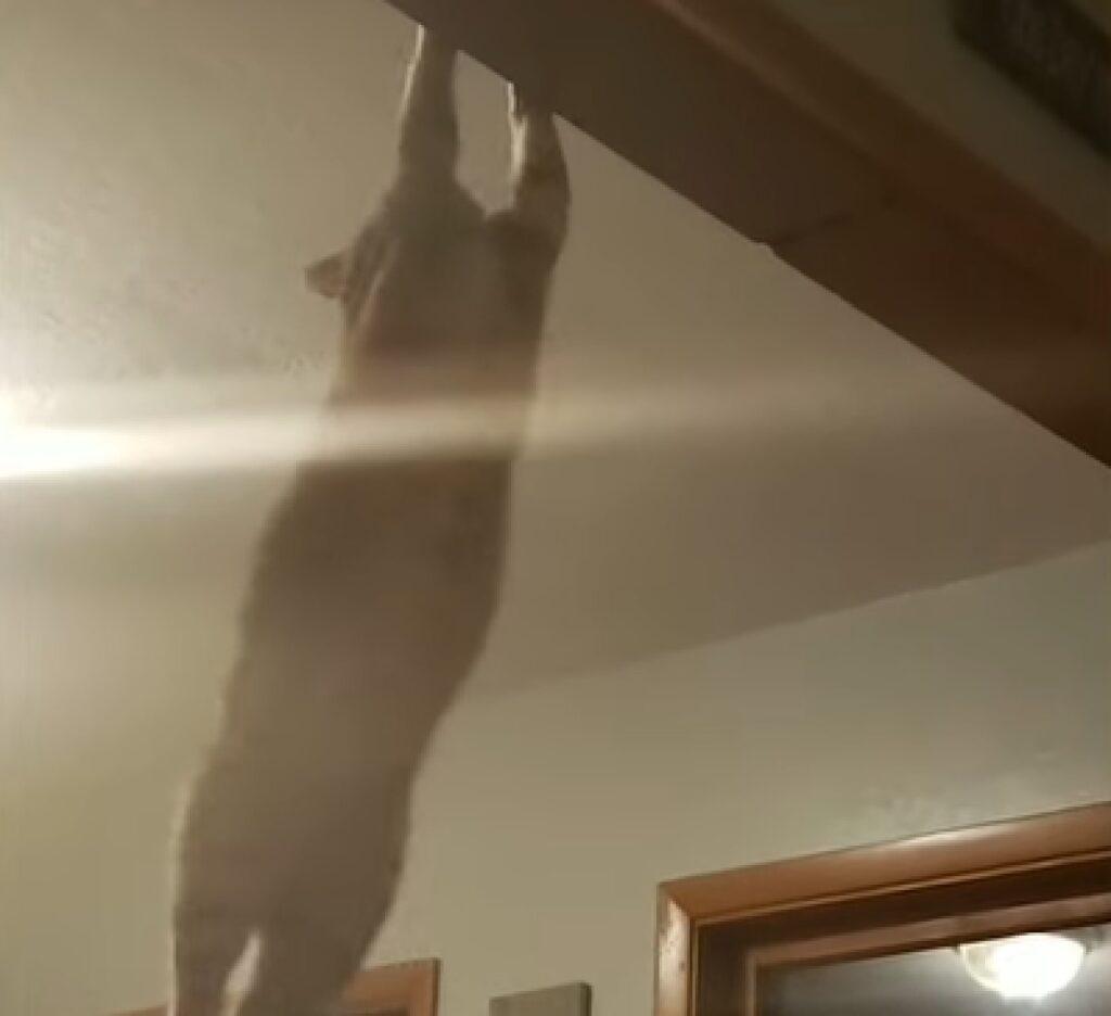 lewis gattino papà todd soffitto