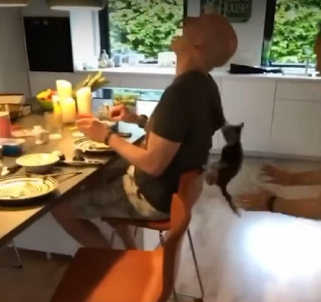 milla gattino europeo colpo finale