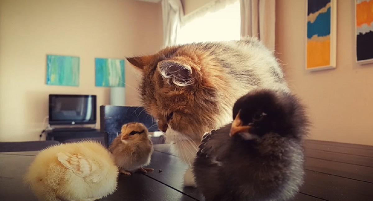 nuovi amici gattino