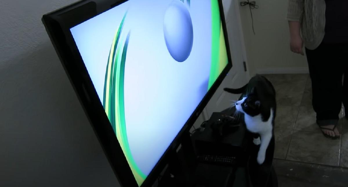 gatto televisione gioco