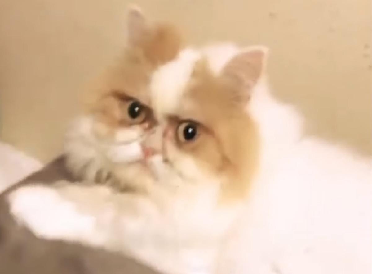 louis gattino persiano michelle mamma