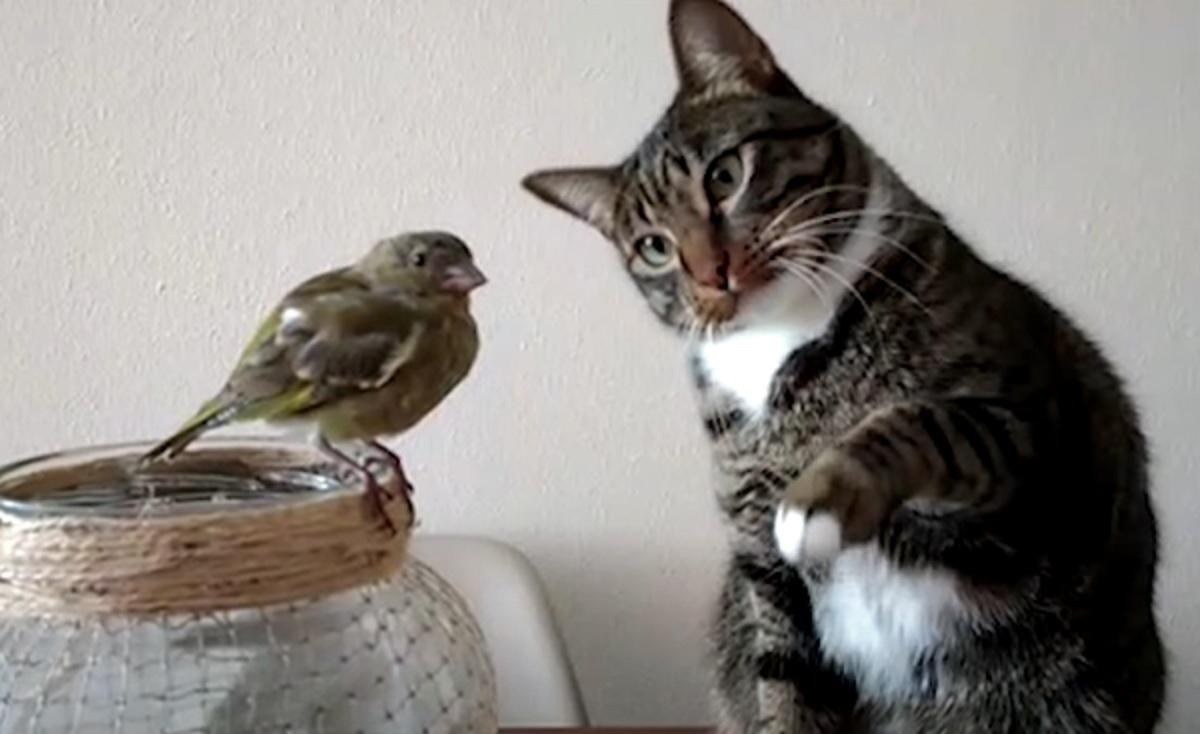 micio amicizia uccello