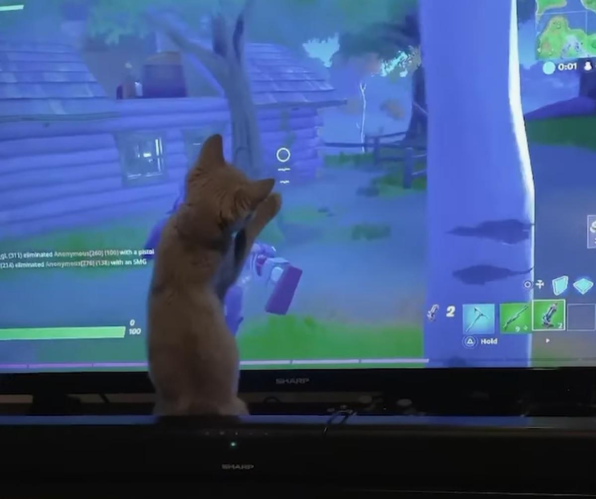 gattino sebastian europeo TV accesa