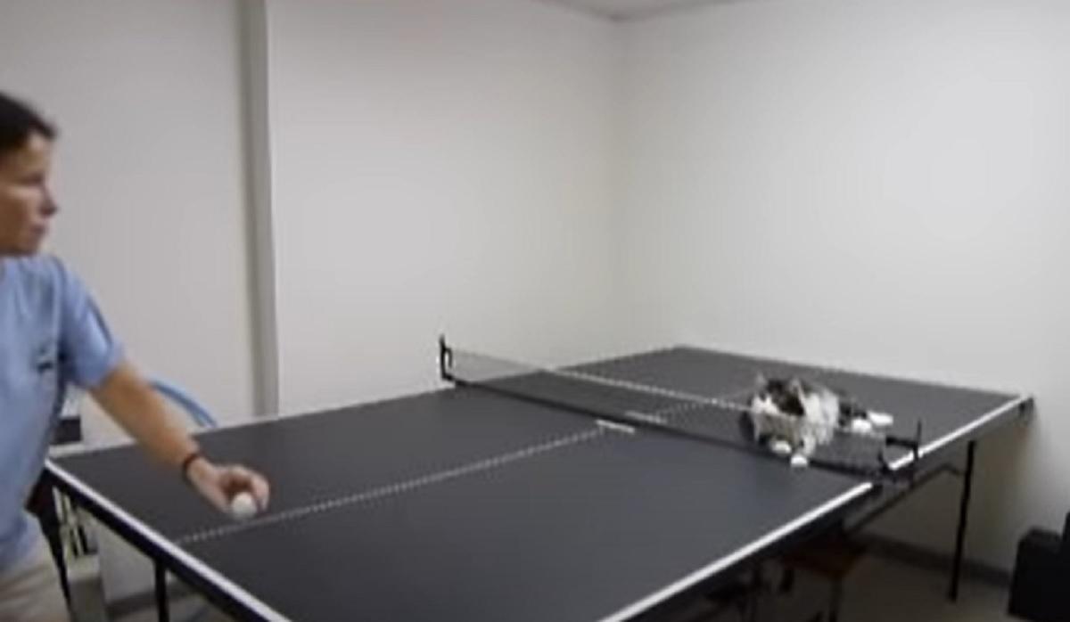 micio tavolo tennis