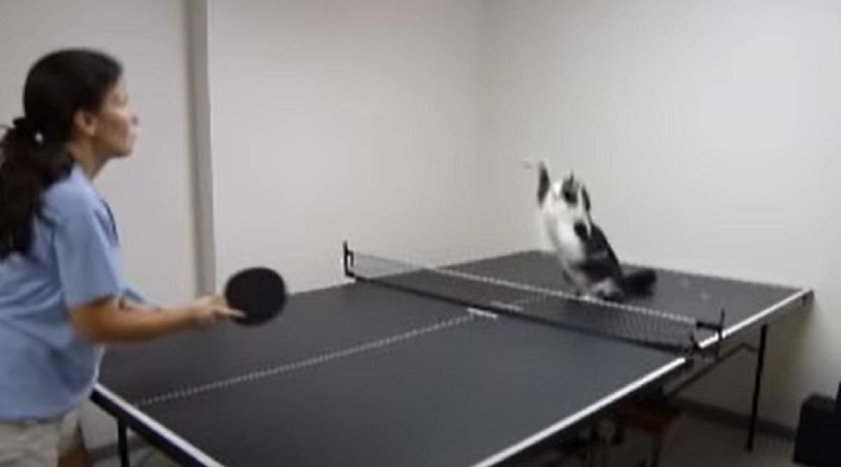 salto pallina micio