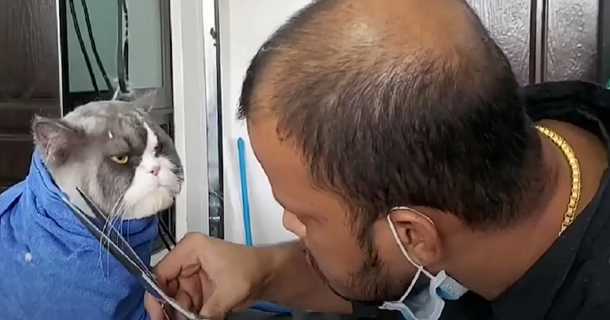 taglio peli micio