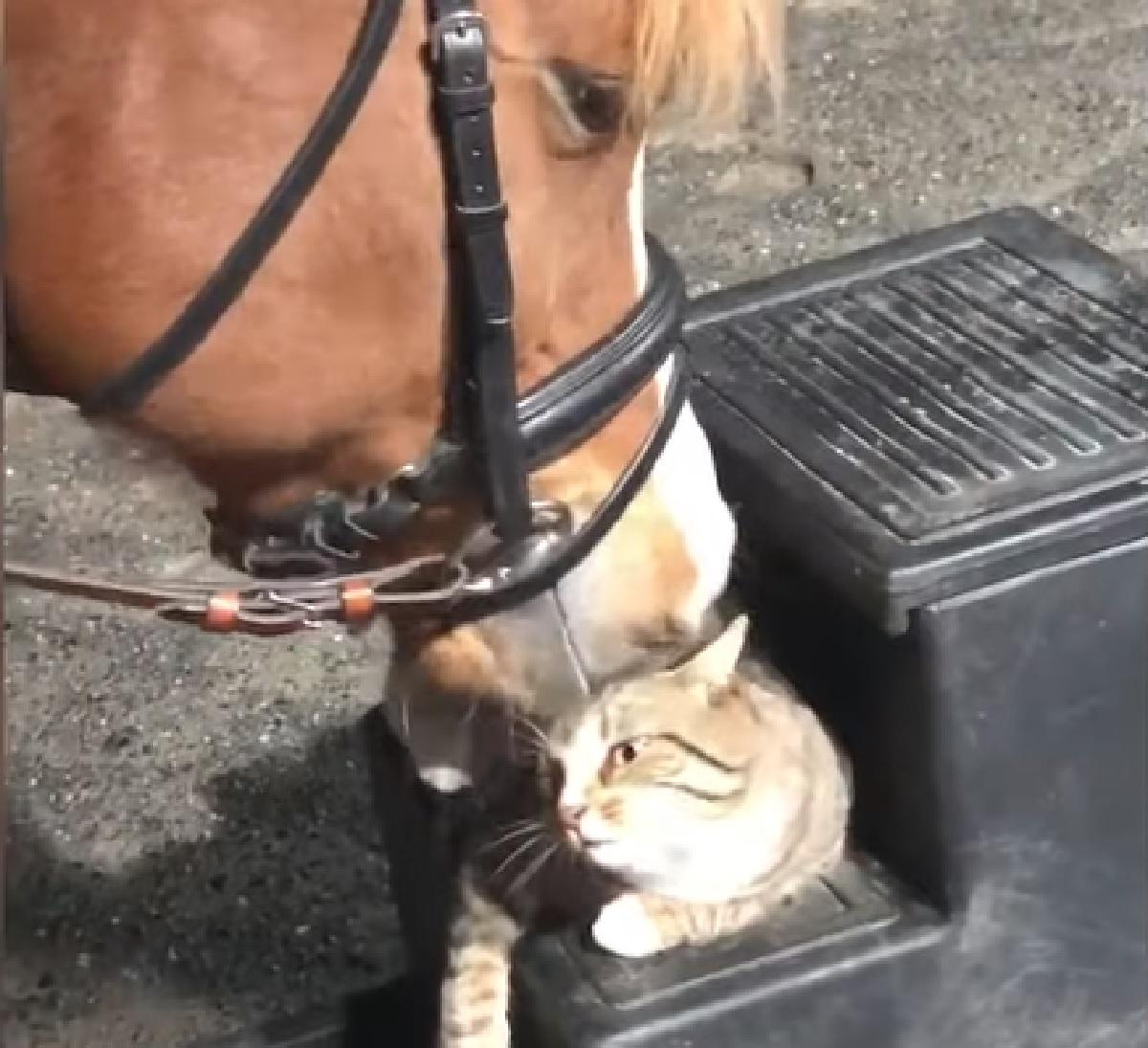 sparrow gattino soriano servizio cavallo