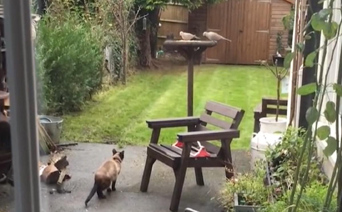saltare gatto pronto