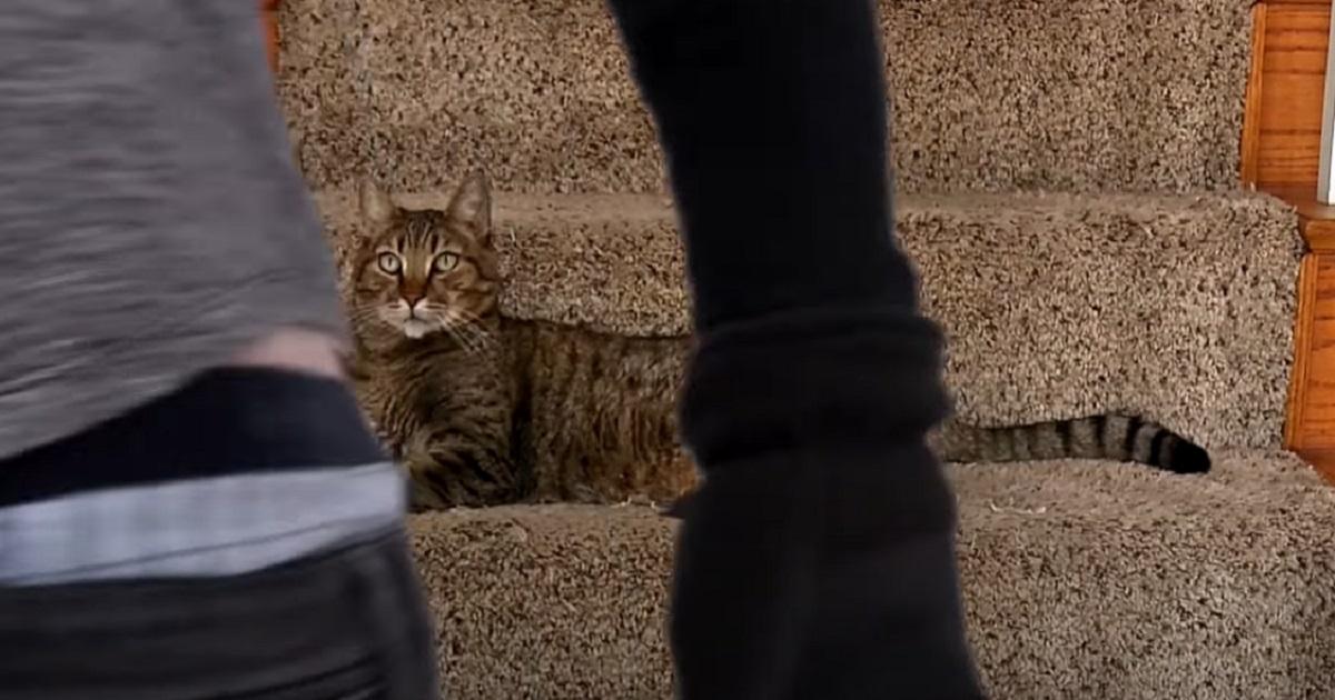 papà ladro gatto