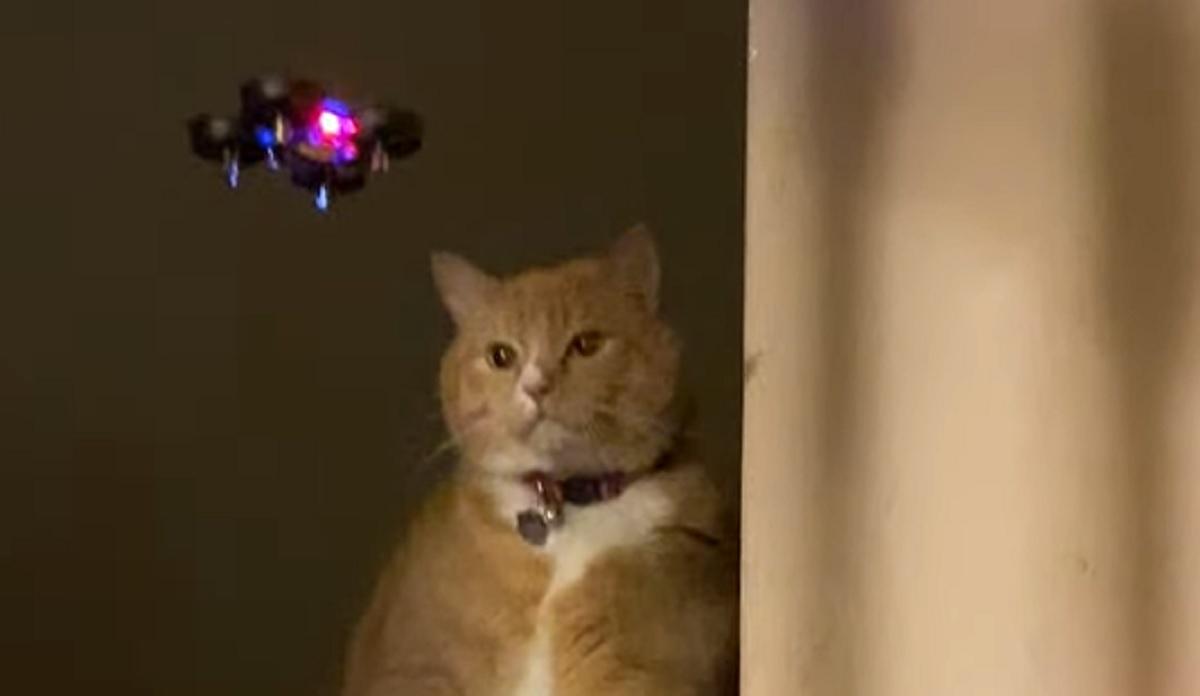 gattino micio punta
