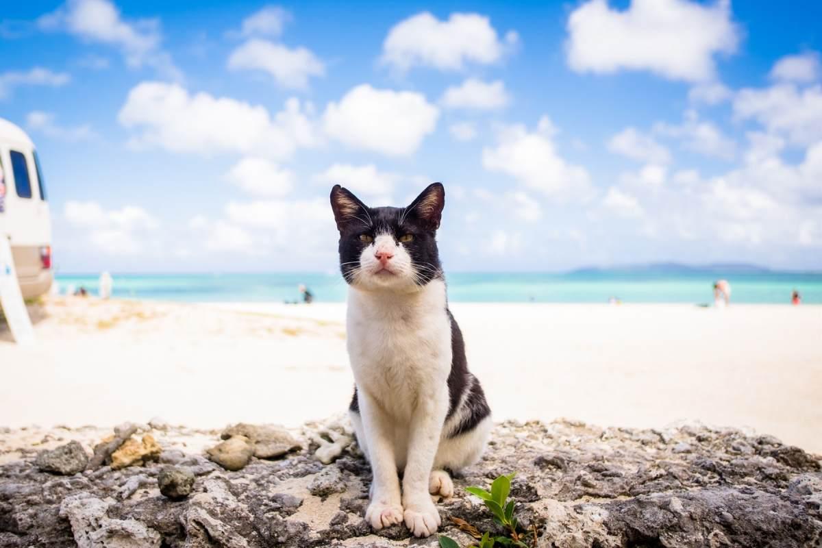 gatto bianco e nero in spiaggia
