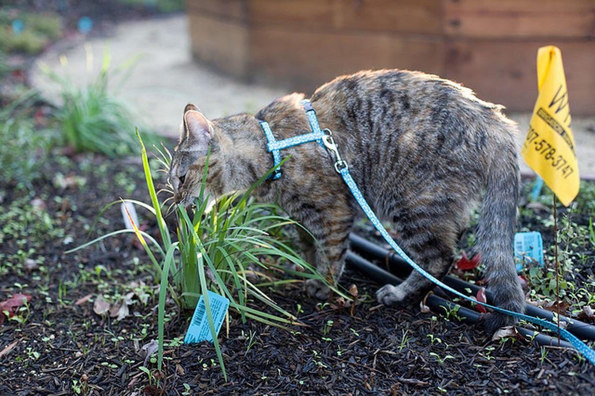 pettorina per gatti