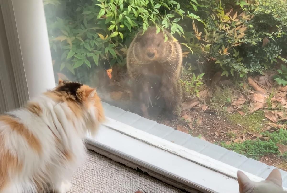polly bella gattine marmotta si presenta
