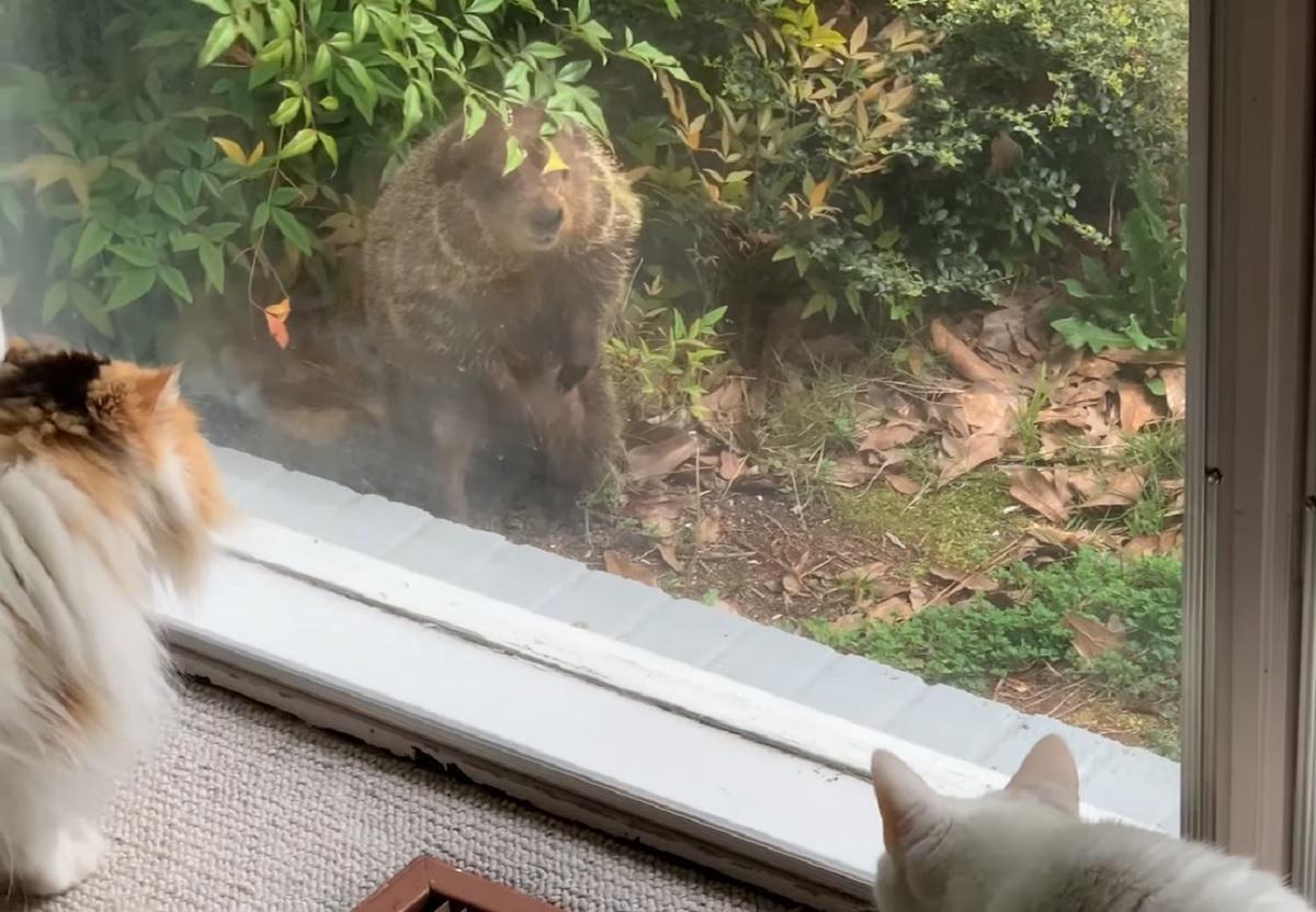 polly bella gattine reazione nuovo incontro