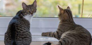 coppia gattini conoscenza una marmotta video