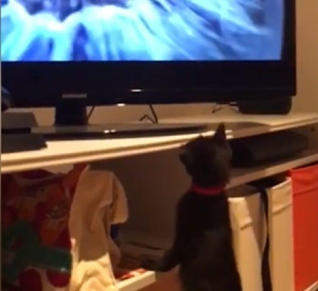 marceline gattina europea documentari televisore