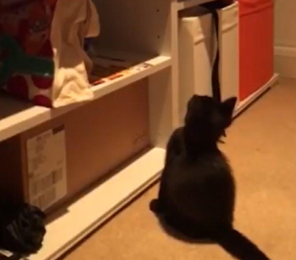 marceline gattina jessica proprietaria