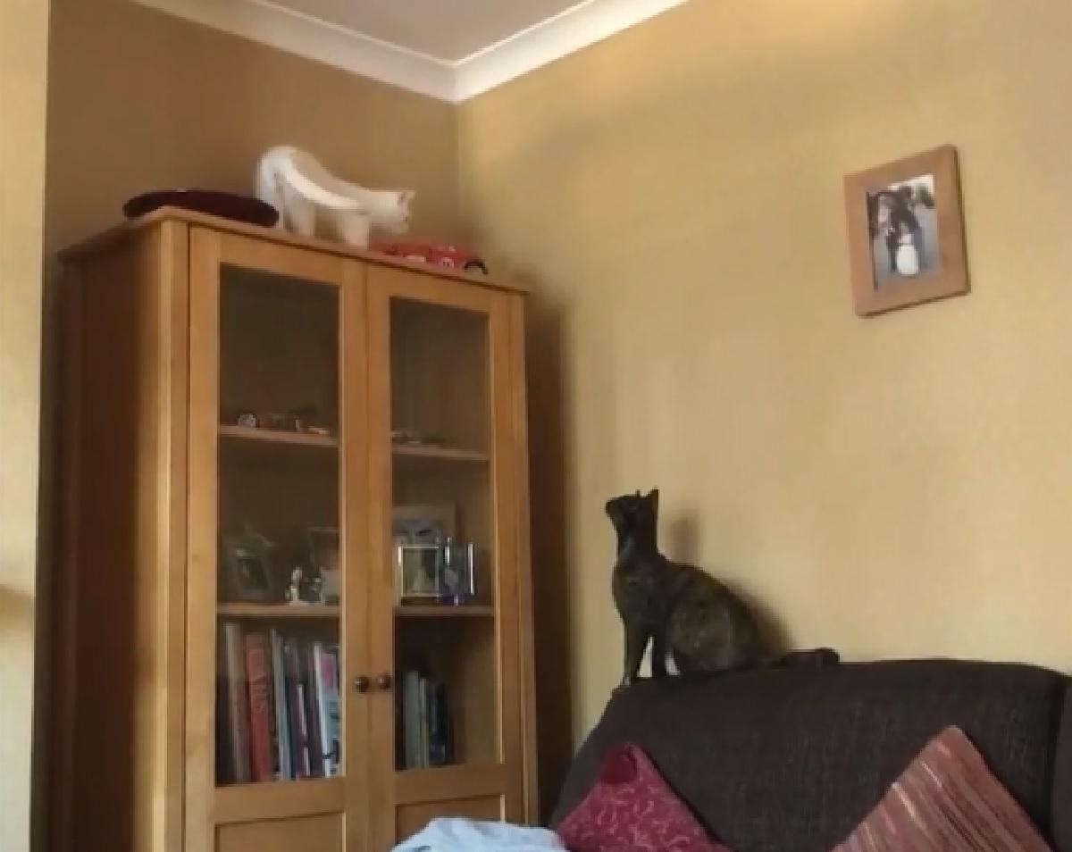 maggie gattina salto fratellino osserva