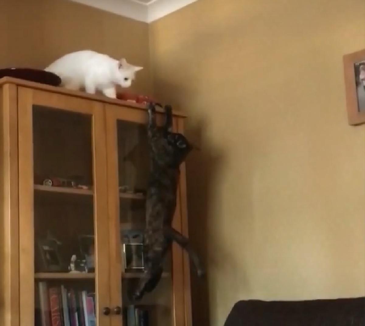 maggie gattina moggy salto fallito miseramente