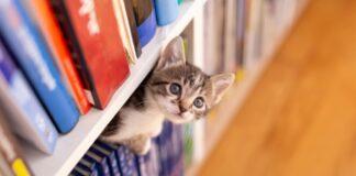 gattina moggy vorrebbe raggiungere fratellino scaffale video