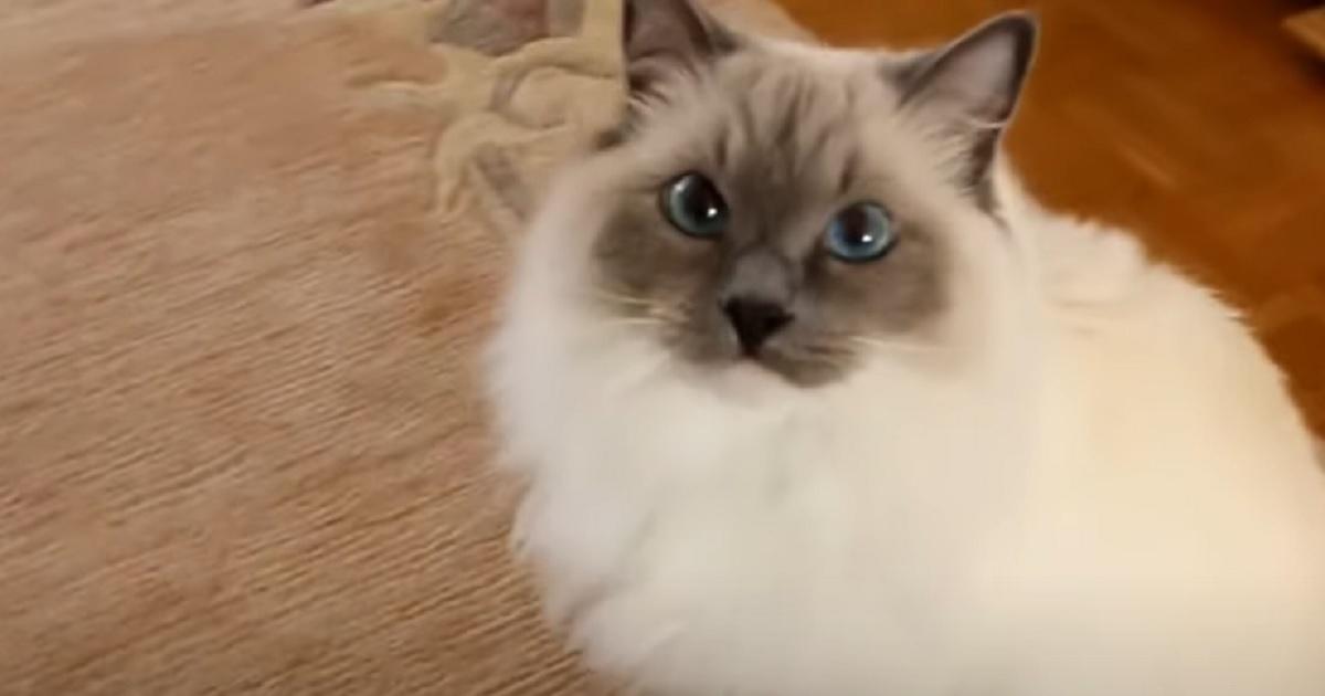 felino micio gatto