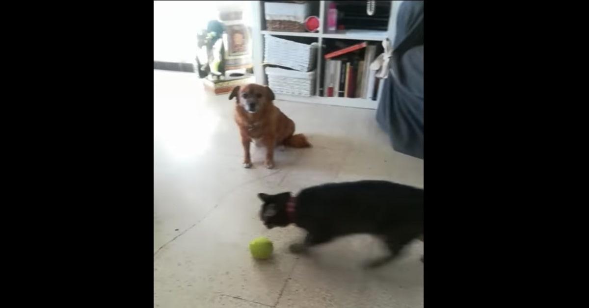 lua gioca con la pallina davanti al cane
