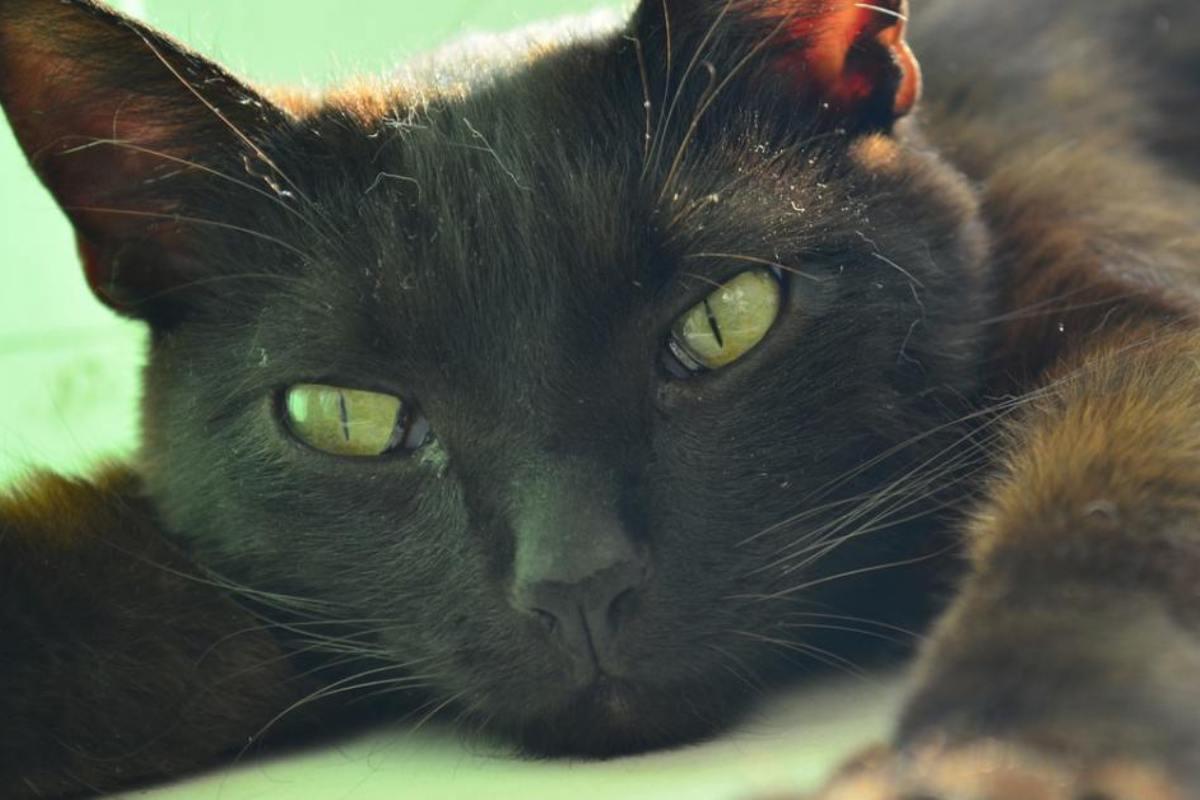 gatto nero che dorme sul pavimento