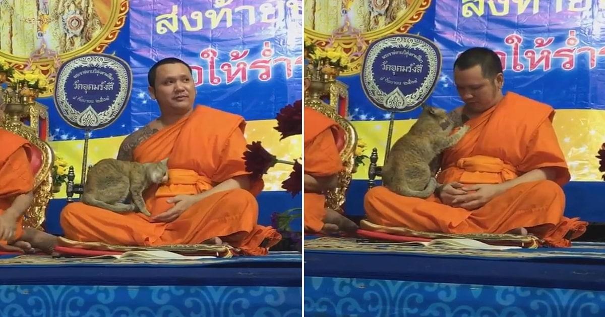 monaco prega ma è disturbato da un gatto due foto