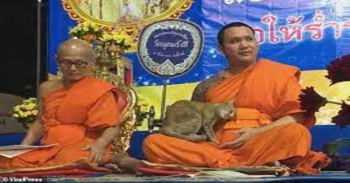 gattino disturba un giovane monaco che prega