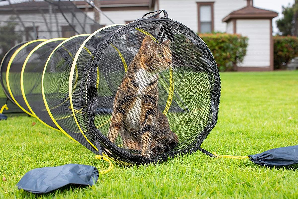 recinto per gatti