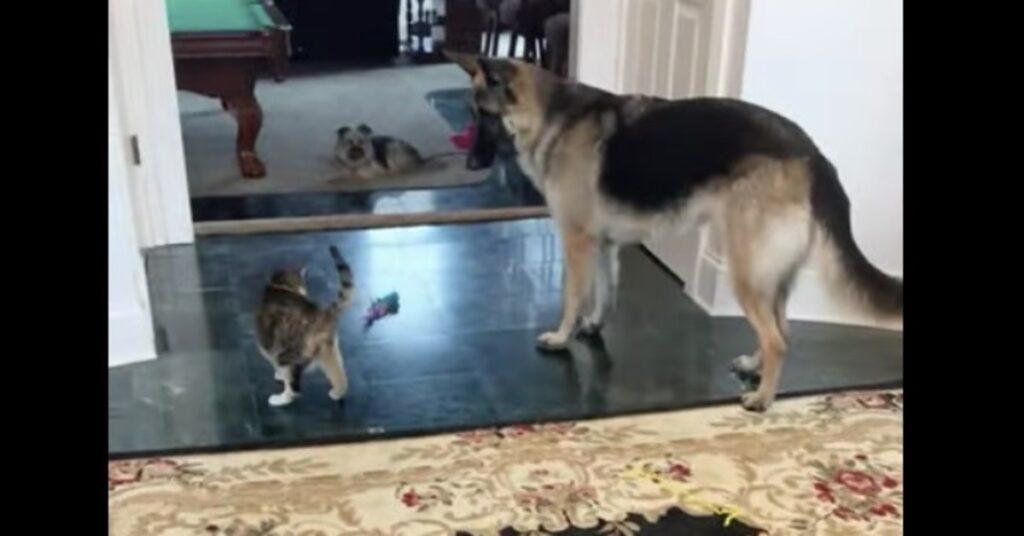 Anya e il gatto giocano insieme