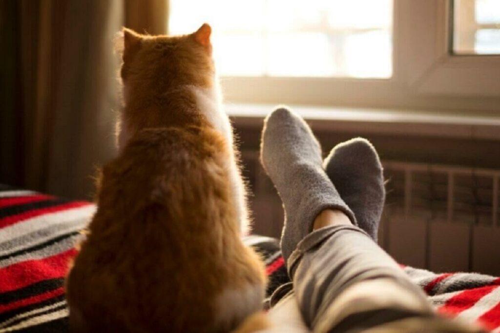 gatto di spalle sul letto