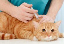 come vaccinare il gatto