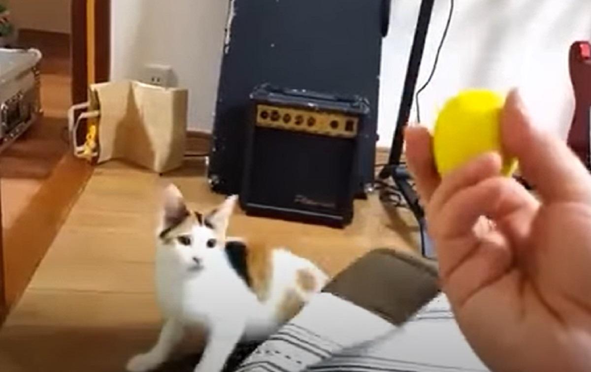 felino micio suono