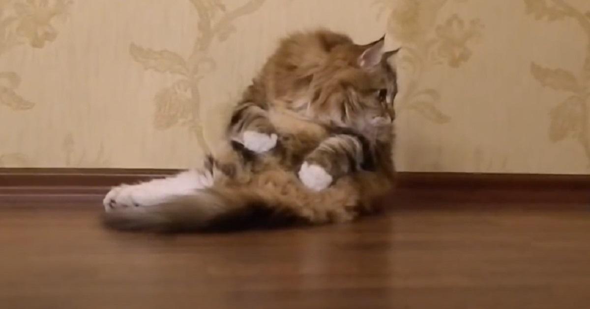 micio gattino pasta