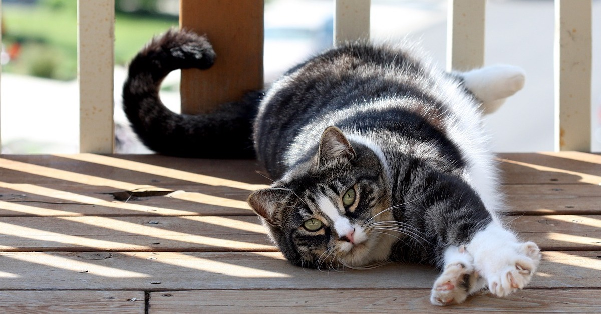 gatto rilassato al sole
