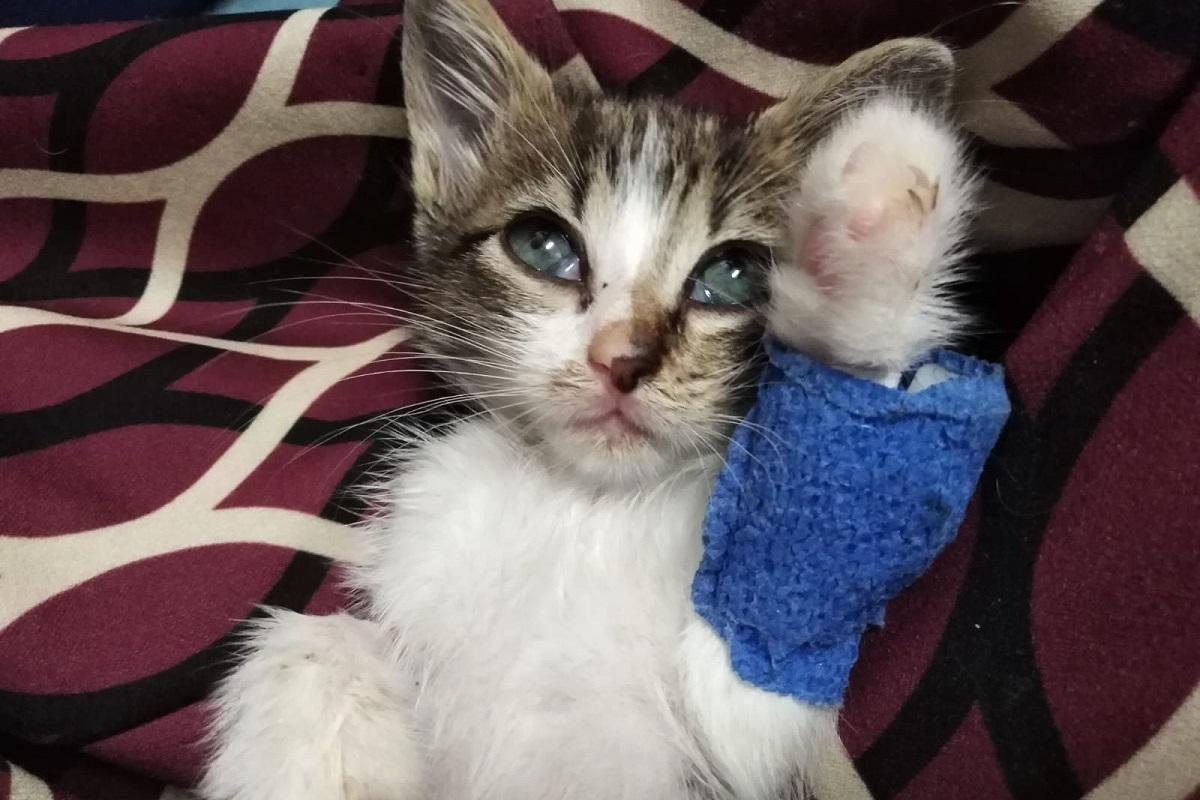 gattino con ferita alla zampa