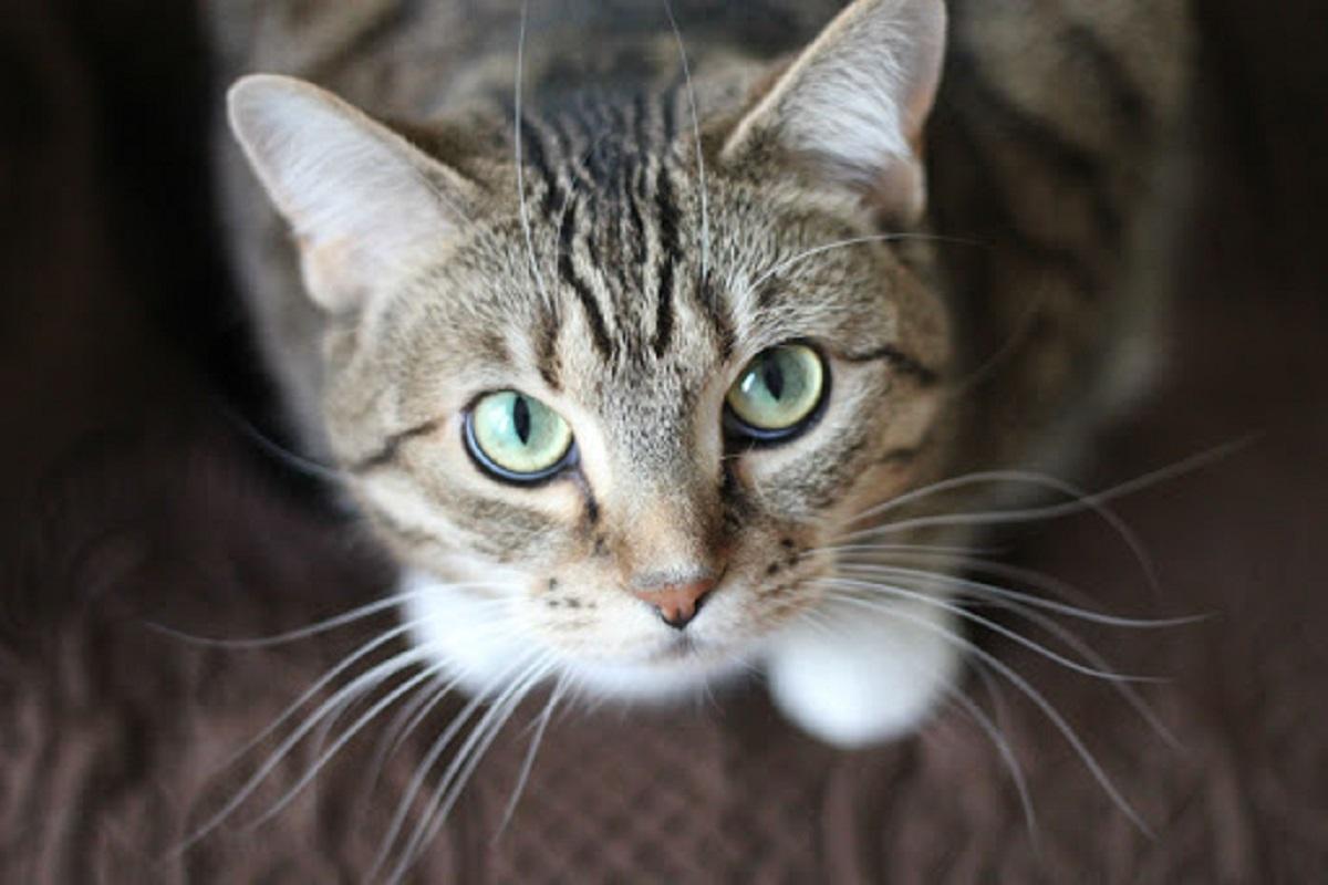 gattino guarda in alto