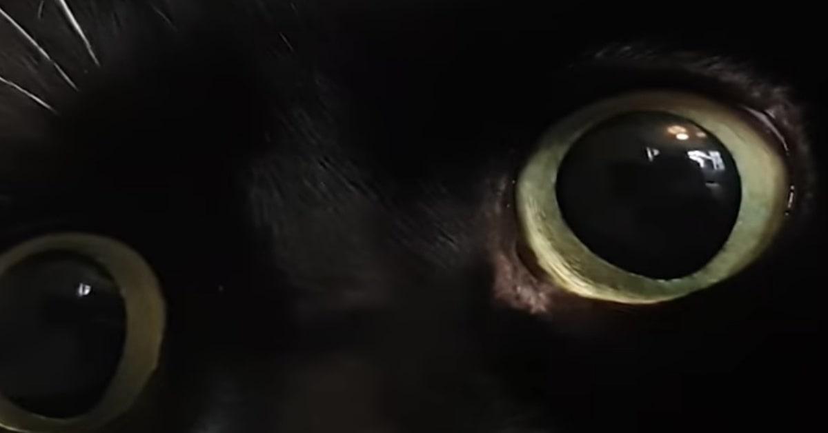 occhi Zelda