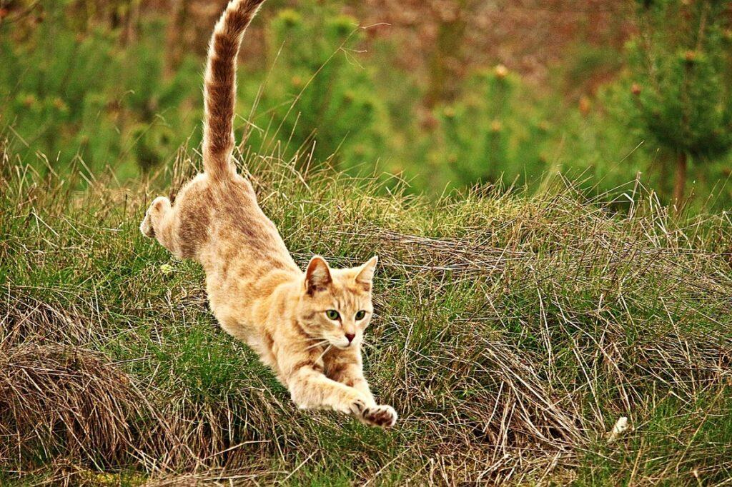 micio agilità salto