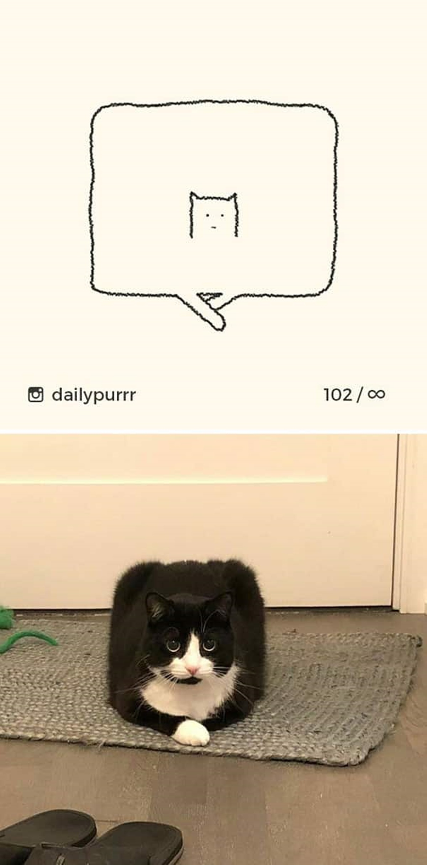 gatto rannicchiato