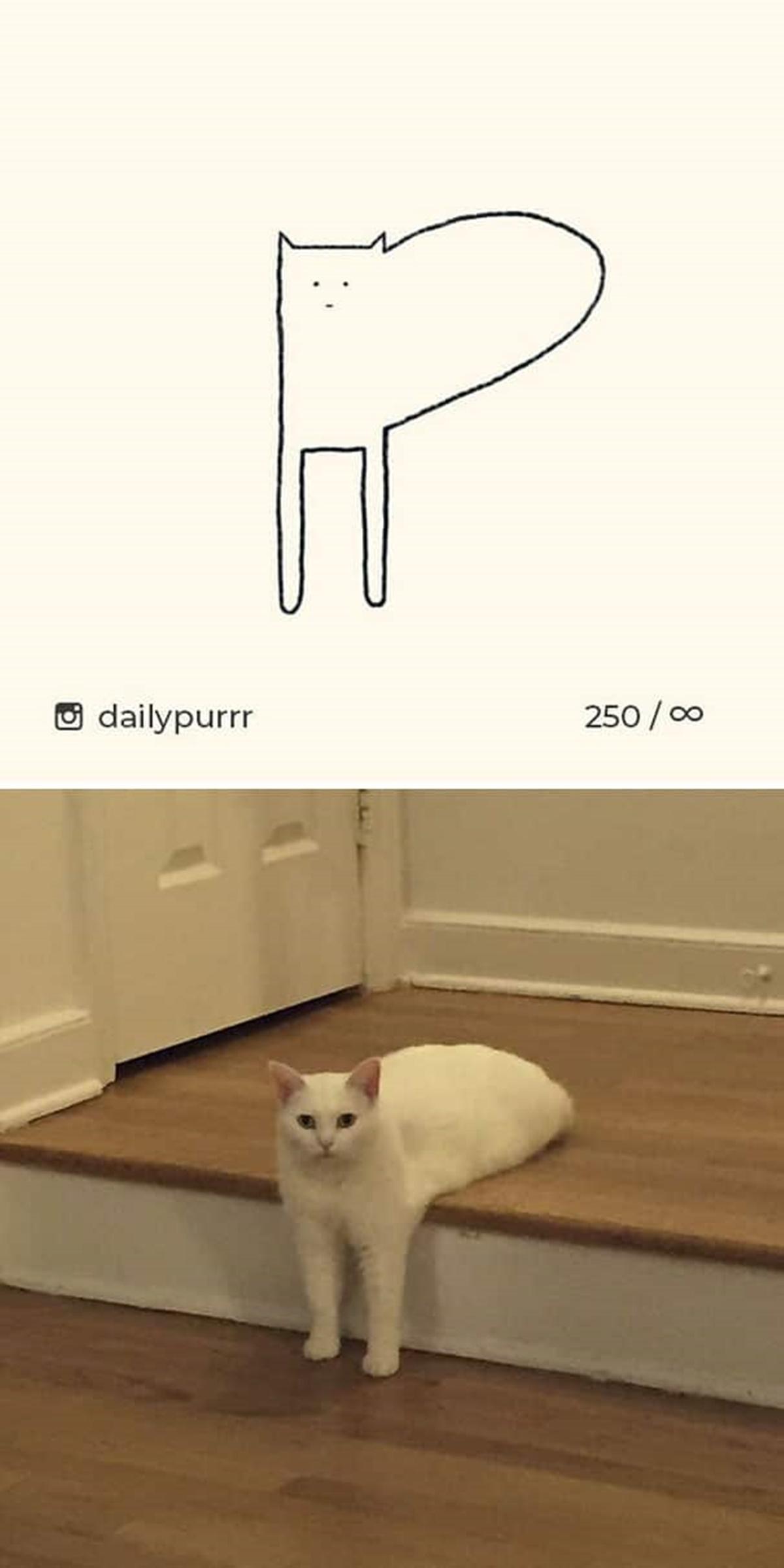 gatto che scende le scale