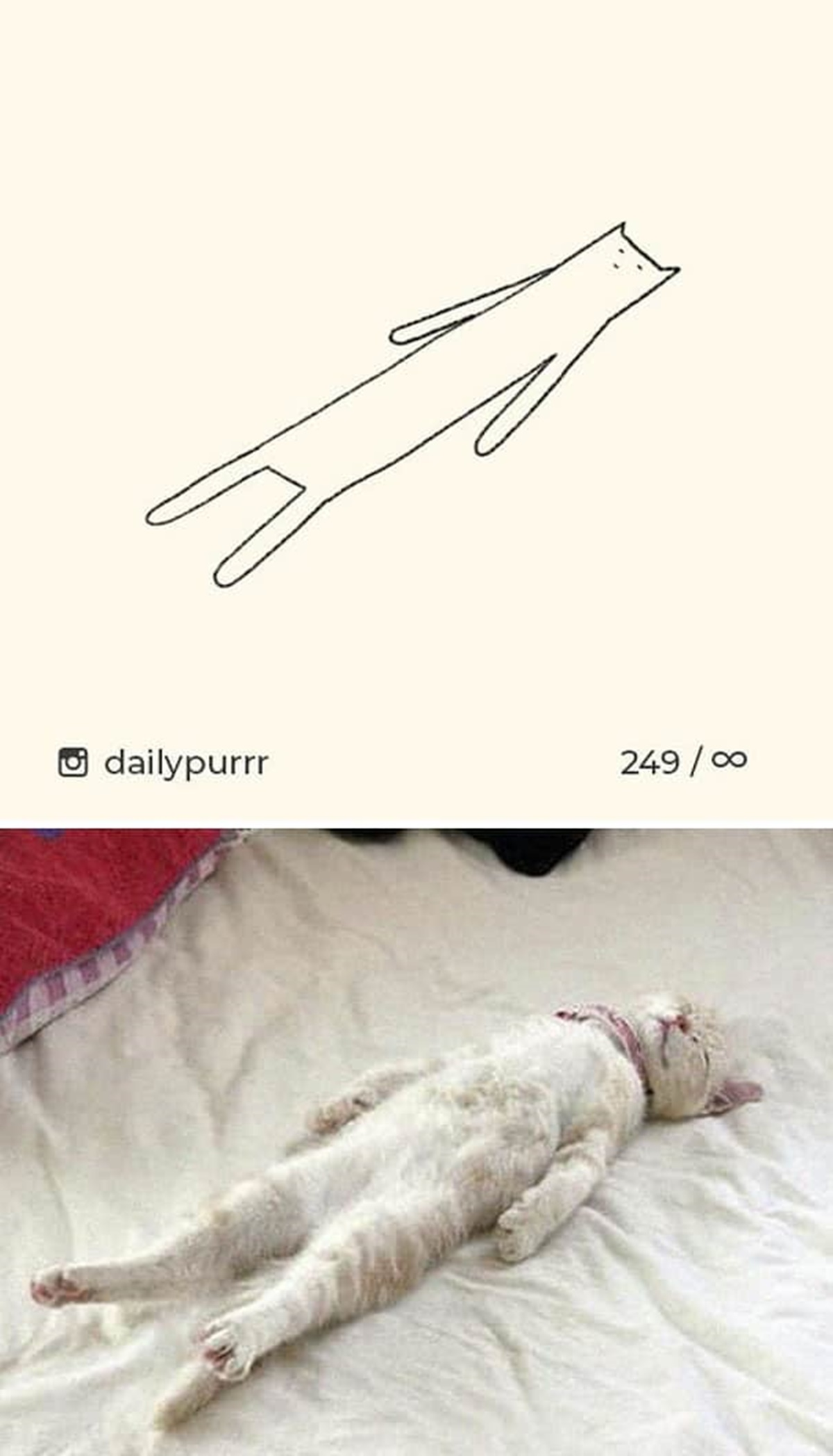 gatto sdraiato che dorme