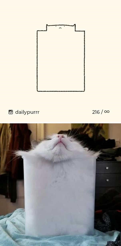 gatto incastrato nella scatola