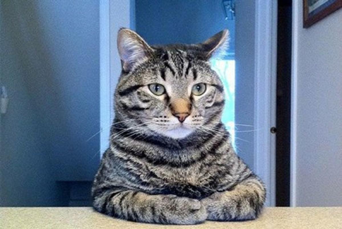 10 foto esilaranti di gatti-gatto indignato